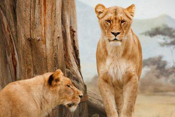 Porque escolhi não fazer Safari na África do Sul. Foto: Pixabay