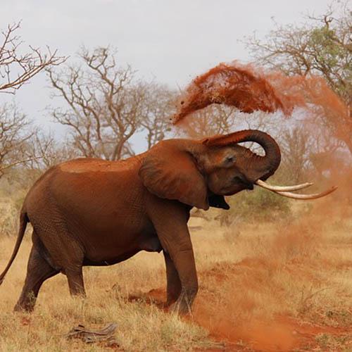 Seguro Viagem - África