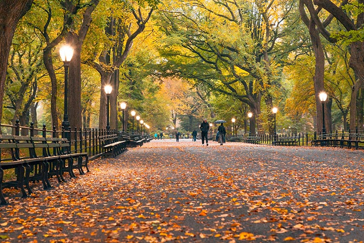 A fall foliage ocorre quando as folhas, já secas, caem das árvores, cobrindo o chão de amarelo - outono em Nova York